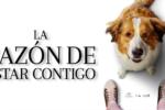 La Razón de Estar Contigo 2: Un Nuevo Viaje (2019) HD 720p y 1080p Latino