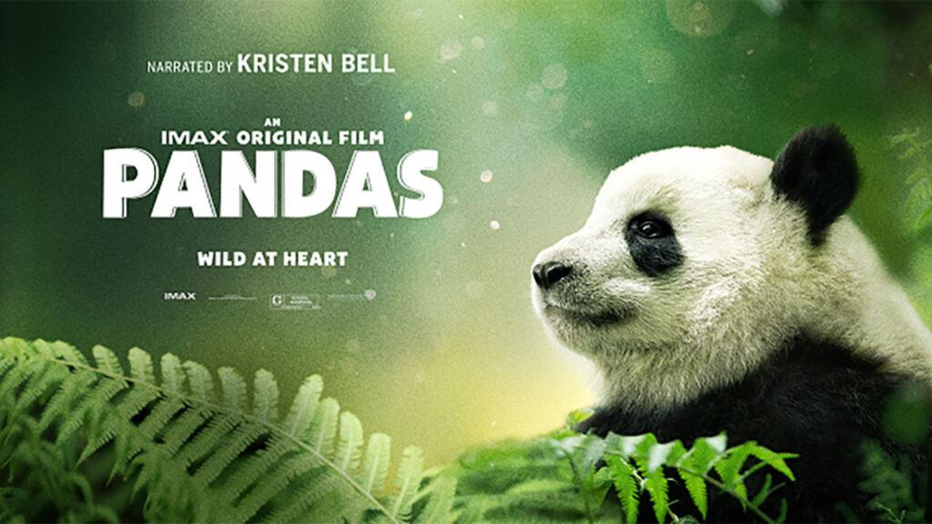 Pandas (2018) hd latino